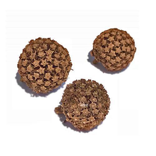 Kra Thum Kok (Mitragyna hirsuta) Seed Pods