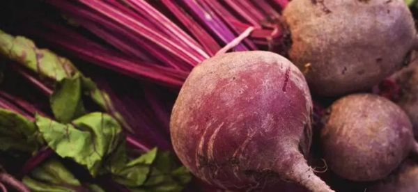 Beetroot (Beta vulgaris)